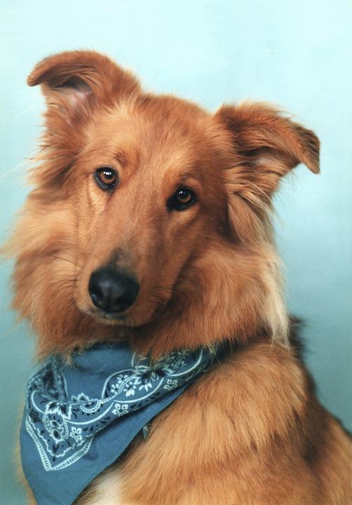 Dog Bandana Pet Bandana