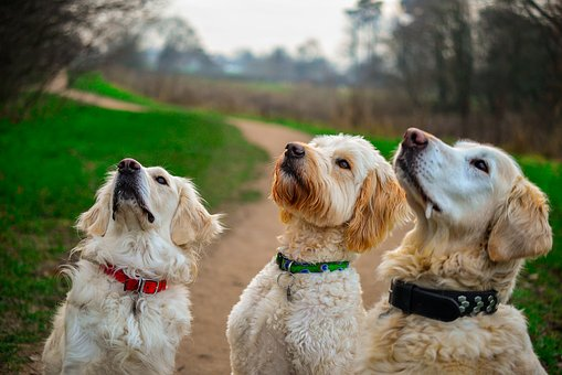 Read more about the article What's New in Dog Treats? We've Come a Long Way Since Milk-Bones