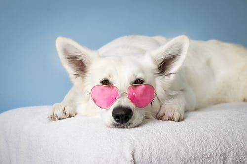 You are currently viewing What's New in Pet Products and Dog Accessories?